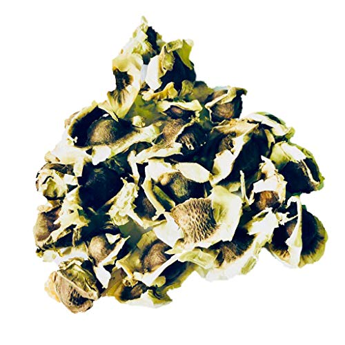 500 Samen Meerrettichbaum -Moringa oleifera- Der Vitaminbaum der sehr schnell wächst