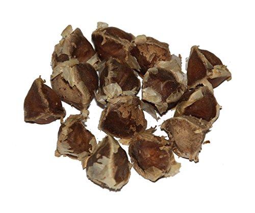 Moringa -Moringa oleifera- 100 Samen *Auch Meerrettichbaum genannt